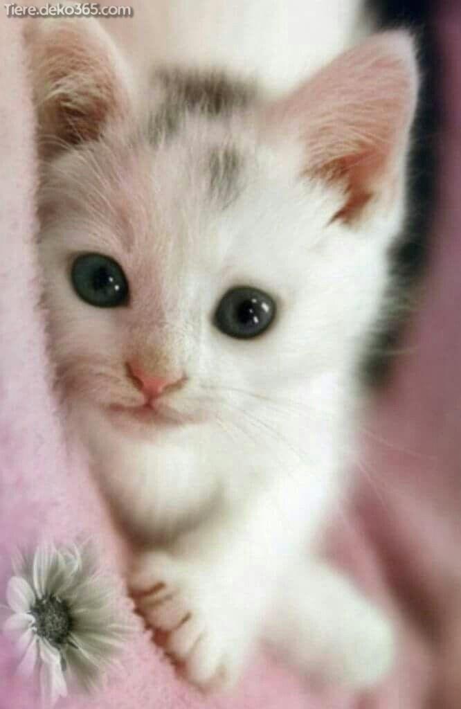 lustige katzen und kätzchen  tieredeko365
