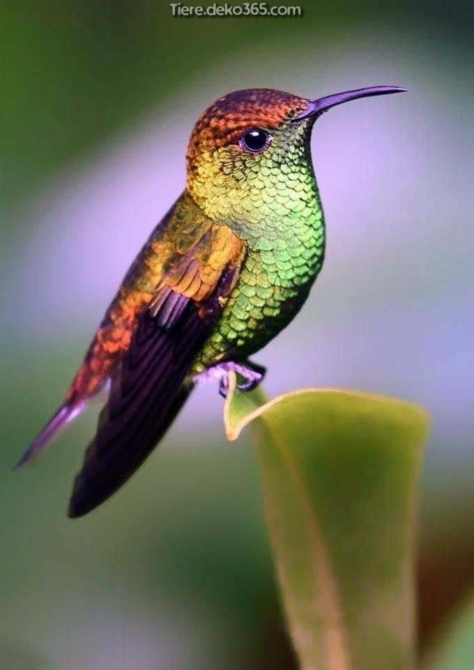 Kolibri Gärten - tiere.deko365